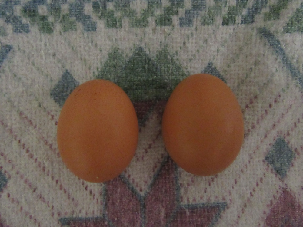these two eggs signifiy so much charity humility and love_ I want a picture of this frames in my future home